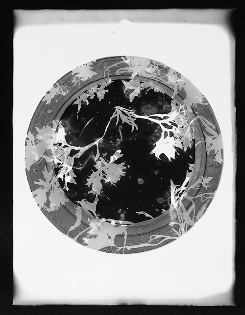 Portrait of Wrack - photogram - Henny Burnett