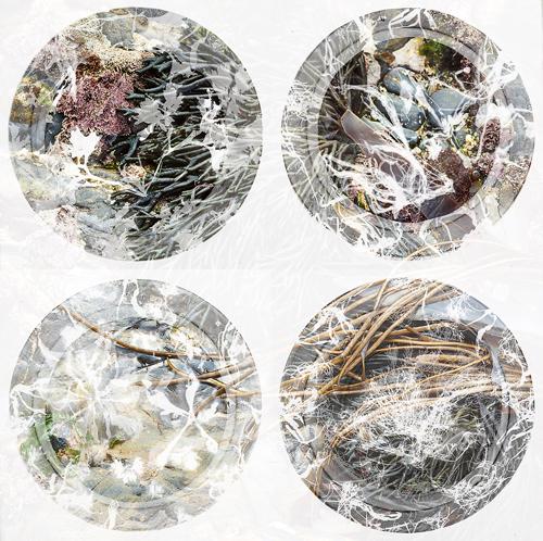 Seaweed Vignettes I,II,III & IV - Burnett & Urmson