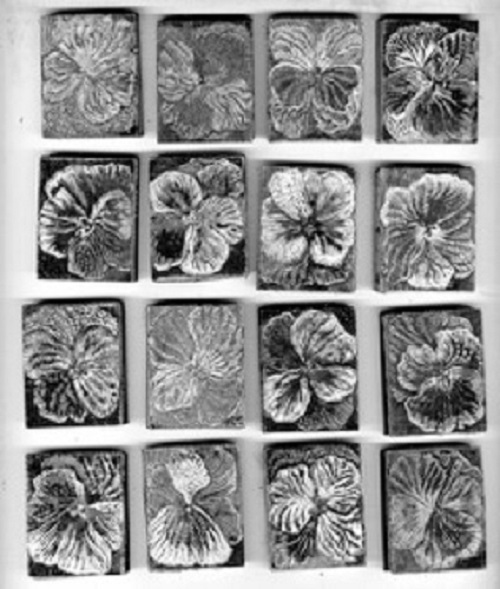 pansies_b.w.smallscan Mary Kuper January 2016